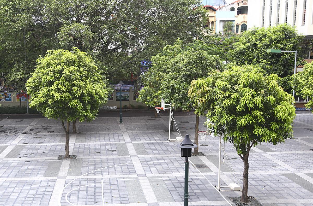 Sân trường THCS Nghĩa Tân Hà Nội trồng nhiều cây nhỏ như xoài. Ảnh: Dương Tâm.