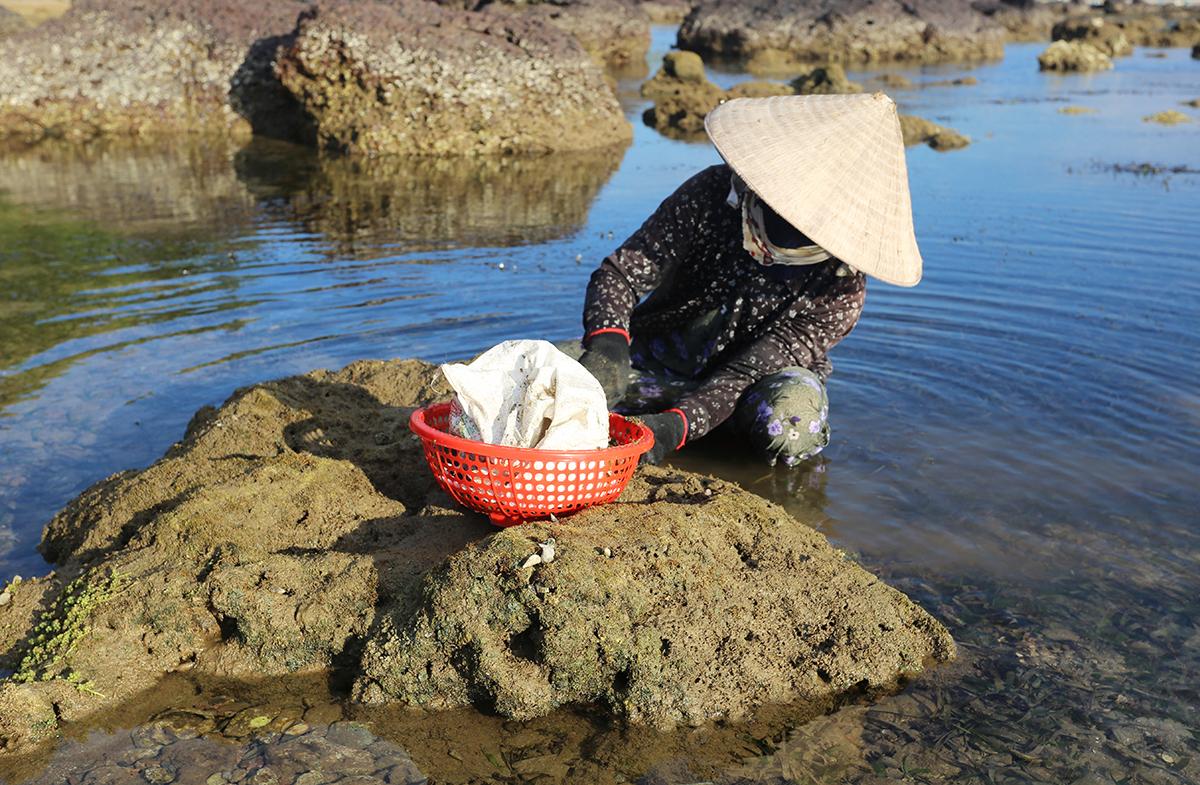 Bà Nguyễn Thị Hận cạo rong trên đá. Ảnh: Đắc Thành.