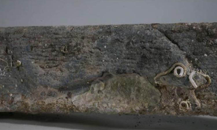 Hình khắc cá heo trên mỏ neo nhằm giúp các thủy thủ xua tan vận rủi. Ảnh:Soprintendenza del Mare.
