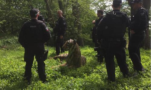 Cảnh sát vũ trang và trực thăng lùng bắt mèo cưng - 5