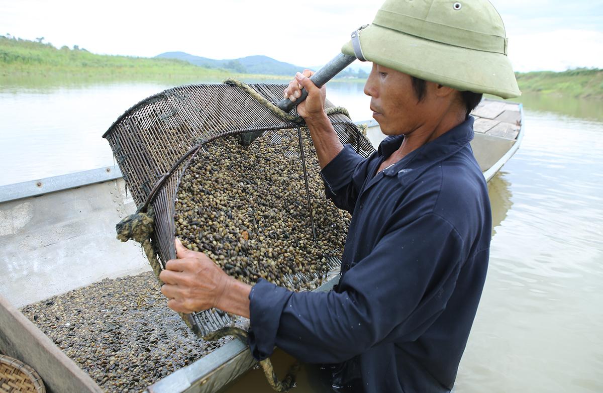 Ảnh Nguyễn Văn Thành đổ mẻ hến vừa cào được vào khoang thuyền. Ảnh: Nguyễn Hải.