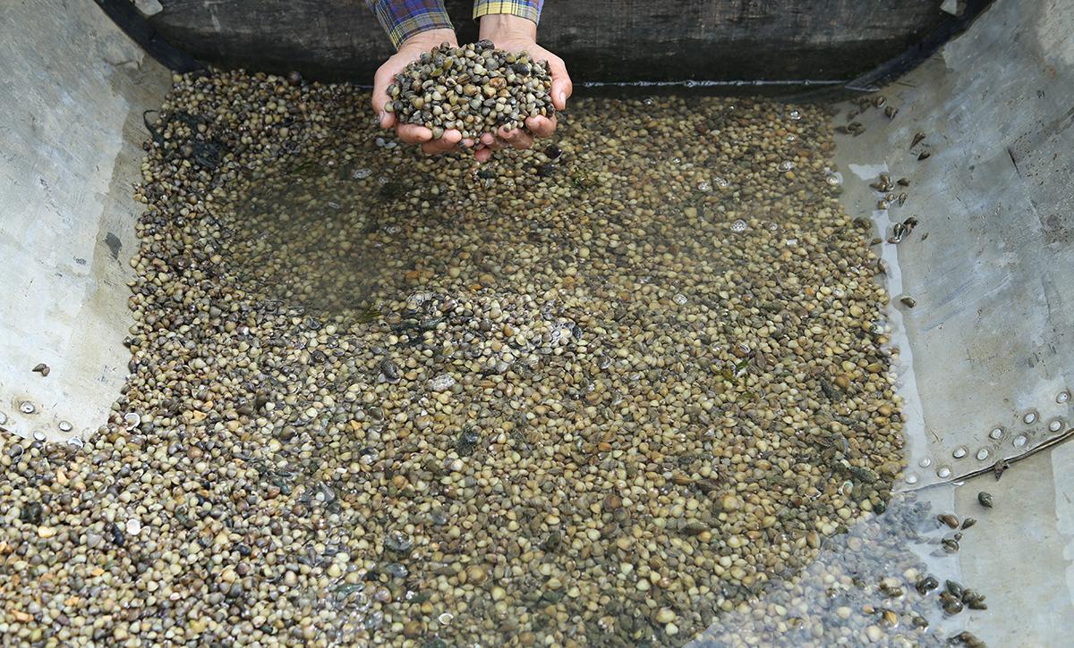 Sản phẩm mà anh Thành thu được sau gần 5 giờ làm việc. Ảnh: Nguyễn Hải.