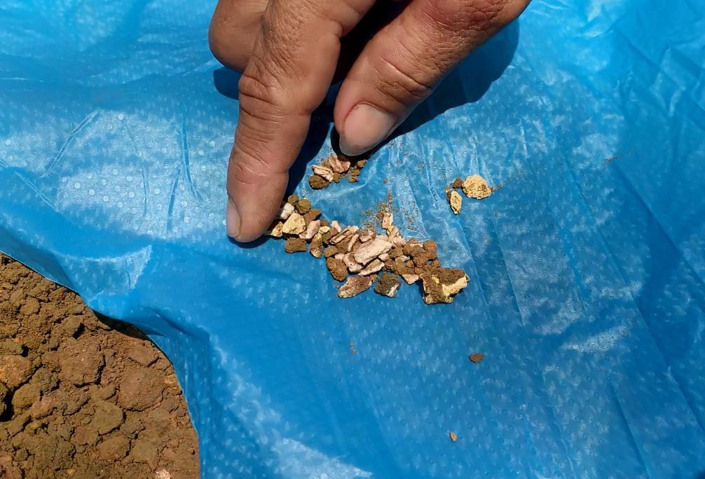 Những mẫu xương tìm thấy trong lúc khai quật đầu tháng 6/2020. Ảnh: Đắc Thành.