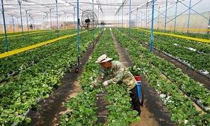 Nông nghiệp chuyển đổi số thế nào sau khủng hoảng