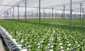 Tọa đàm thúc đẩy chuyển đổi số trong nông nghiệp sau Covid-19