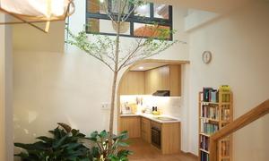 Trồng bàng cao 3 mét giữa phòng khách