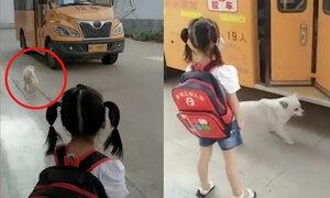 Cún con hộ tống cô chủ nhỏ đi học mỗi ngày