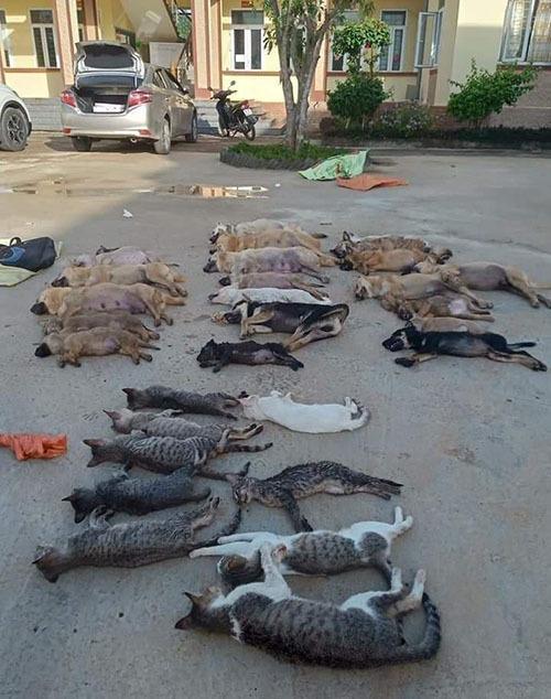 Chó mèo chết la liệt khi ăn phải bả cá khô chứa cyanua ở xã Thanh Hoà hôm 14/6. Ảnh: Lam Sơn.
