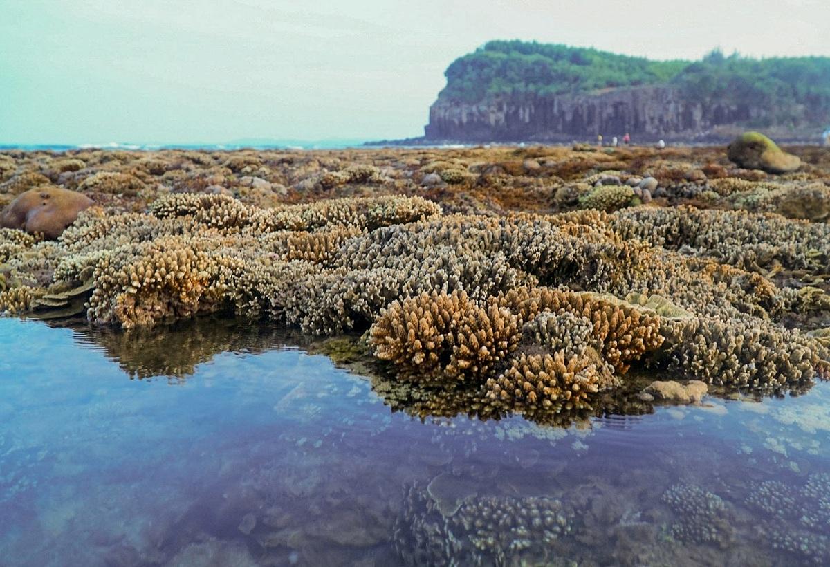 Bãi san hô Gành Yến lộ ra trên mặt biển khi thủy triều rút. Ảnh: Phạm Linh.