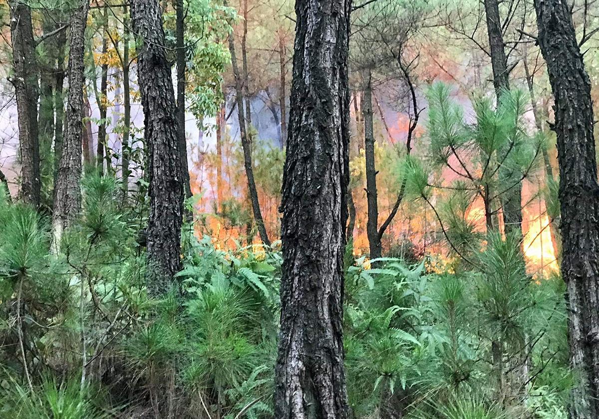 Ngọn lửa lúc đang cháy lan tại rừng thông ở xã Sơn Thành. Ảnh: CTV.