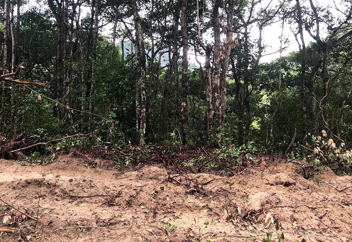 Đơn vị thi công đã ủi đất, chặt cây để làm hạ tầng dự án. Ảnh: Hắc Minh.