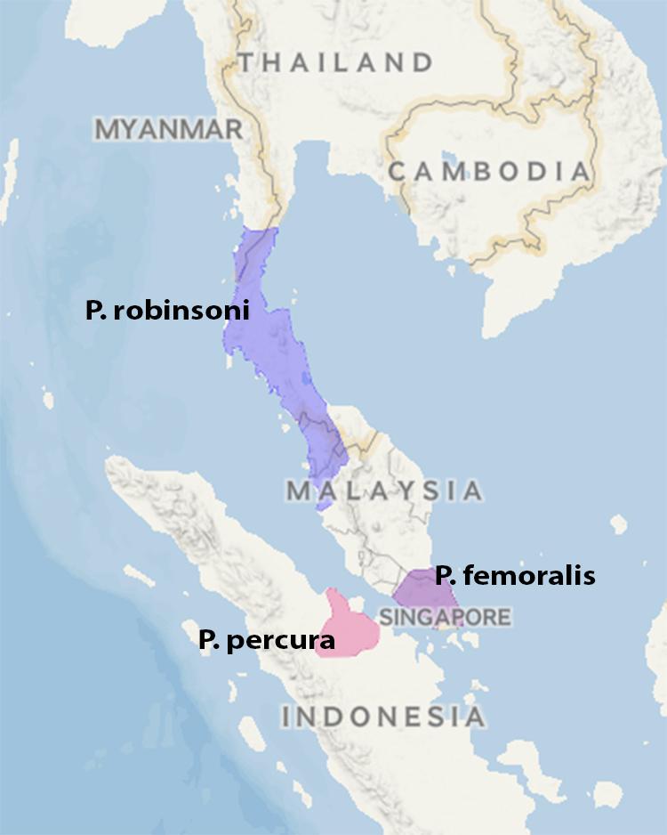 Bản đồ phân bố ba loài voọc mới. Ảnh: Scientific Reports