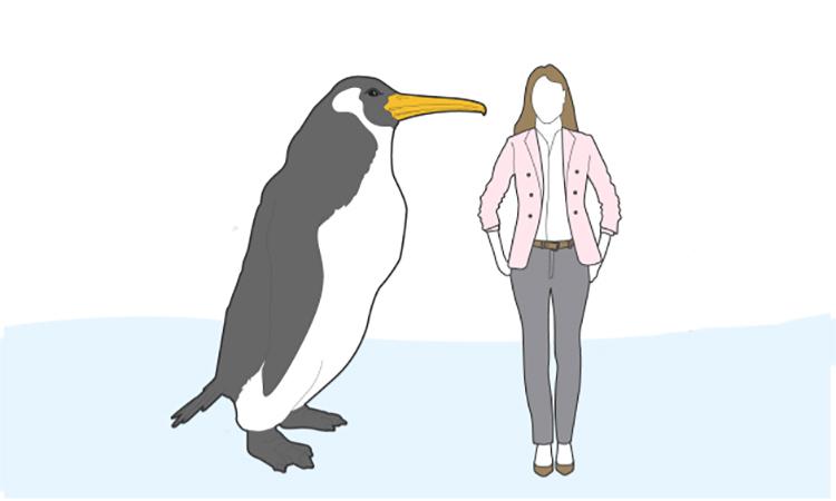 So sánh kích thước chim cánh cụt khổng lồ Crossvallia waiparensis với con người. Ảnh: