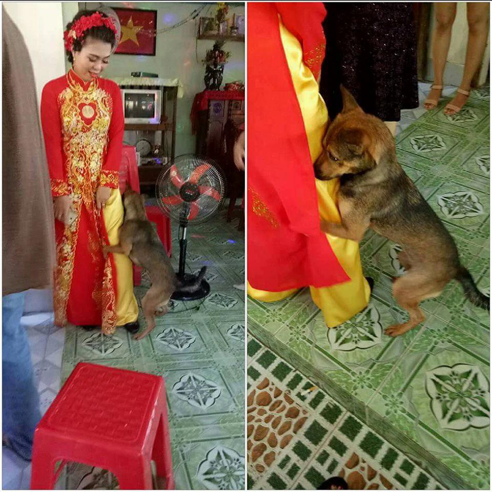 Những khoảnh khắc phá đám ảnh cưới của chó cưng - 10