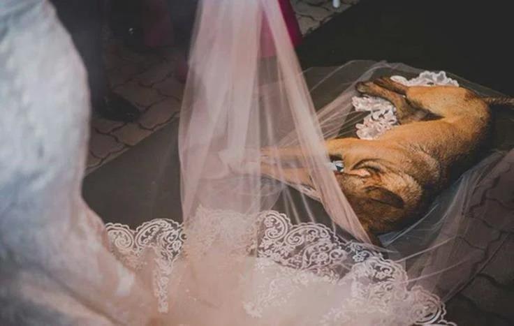Những khoảnh khắc phá đám ảnh cưới của chó cưng - 12