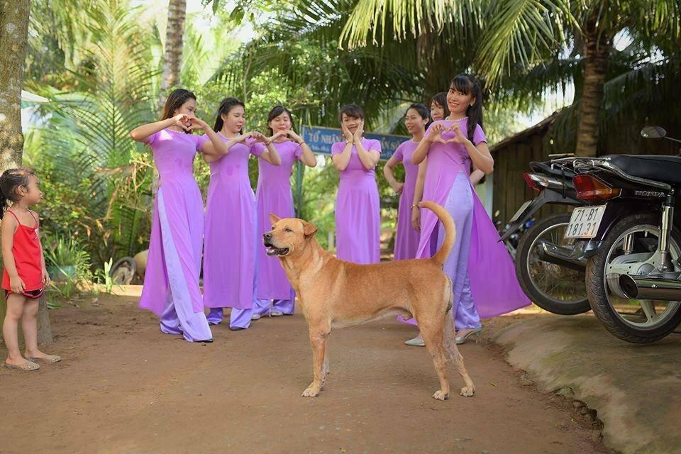 Những khoảnh khắc phá đám ảnh cưới của chó cưng - 8