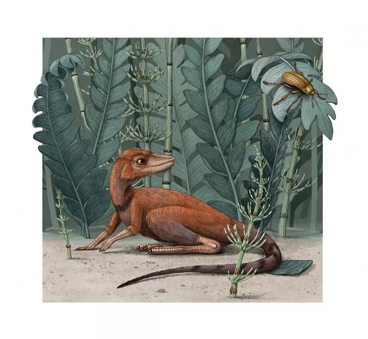 Kongonaphon kely chủ yếu ăn côn trùng và động vật không xương sống nhỏ. Ảnh: Alex Boersma.