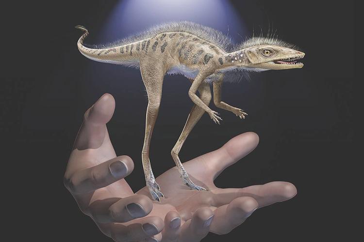 Hình ảnh phục dựng loài bò sát Kongonaphon kely. Đồ họa: Frank Ippolito.