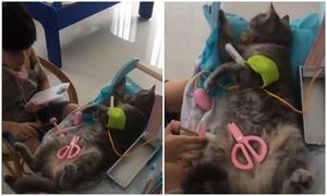 Bé trai đóng vai bác sĩ khám bệnh cho mèo