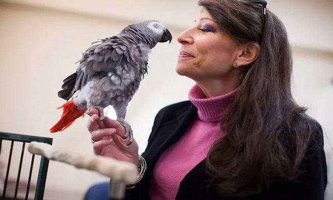 Vẹt Griffin và nhà tâm lý học Irene Pepperberg. Ảnh: Live Science.