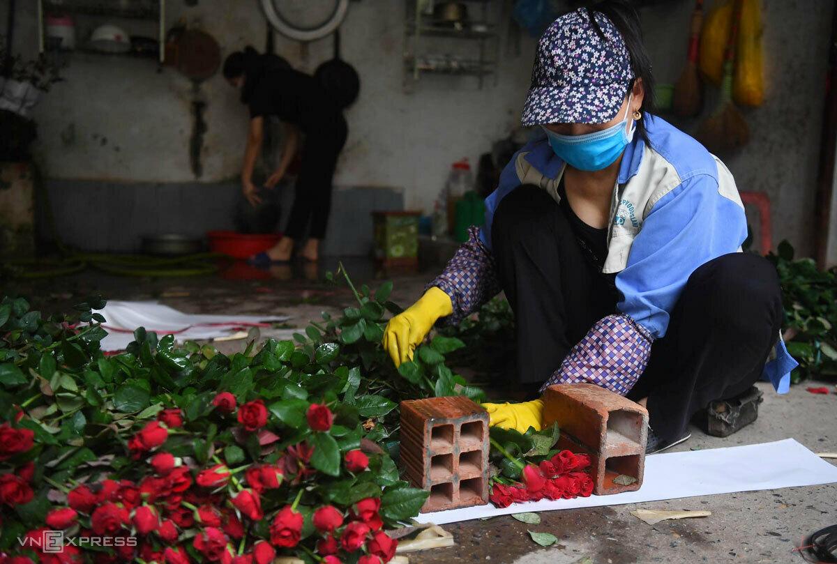 Hồng là loại hoa có diện tích trồng nhiều nhất, ngốn thuốc bảo vệ thực vật nhất ở vùng hoa Mê Linh. Ảnh: Giang Huy.