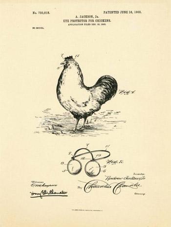 Cặp kính dành cho gà được phát minh nhằm bảo vệ chúng trước hành động mổ mắt của những con gà hung hăng.