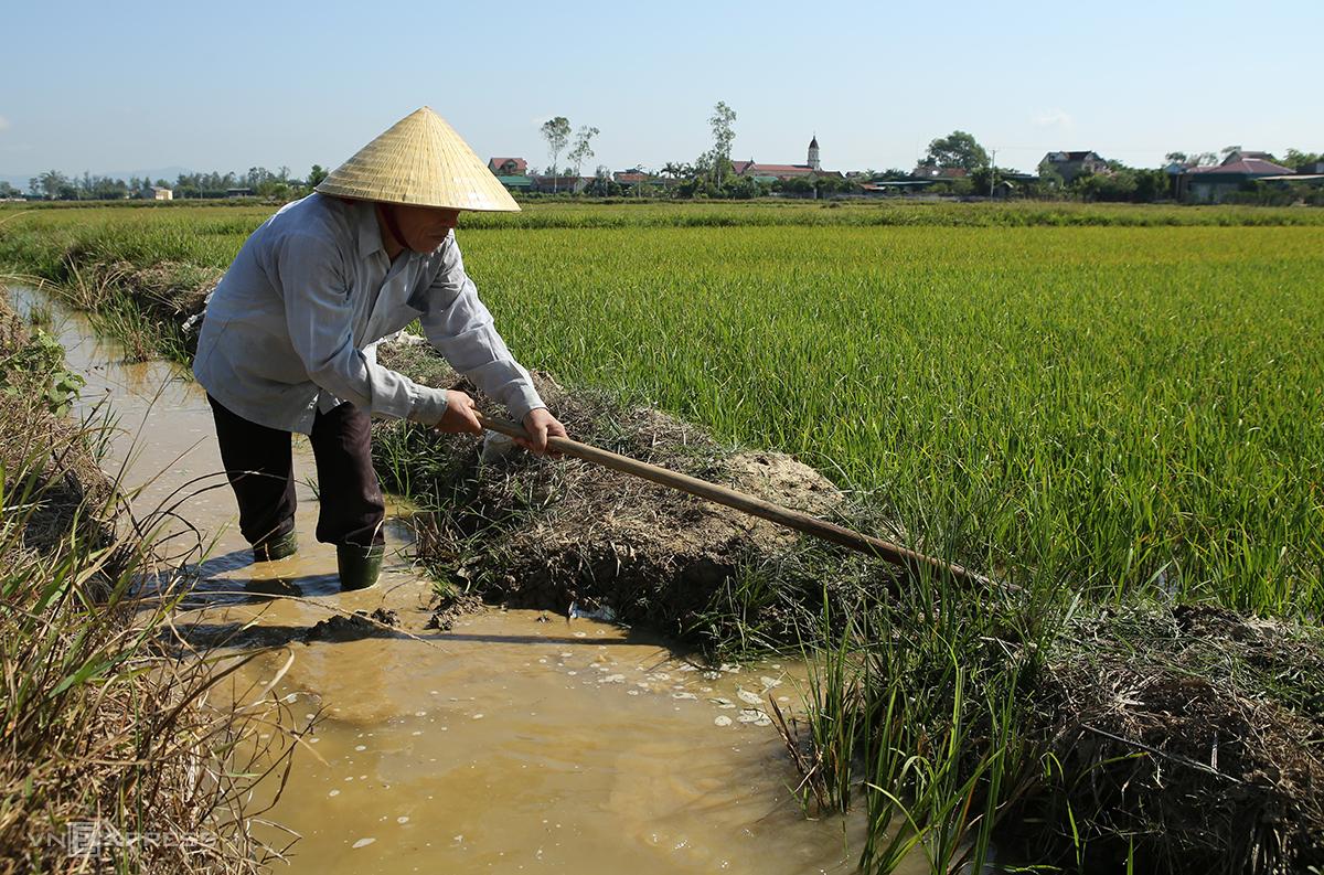 Nông dân xóm Hưng Thịnh đưa những giọt nước cuối cùng ở vũng đọng lò gạch cách đồng 4 km về cứu lúa. Ảnh: Nguyễn Hải.