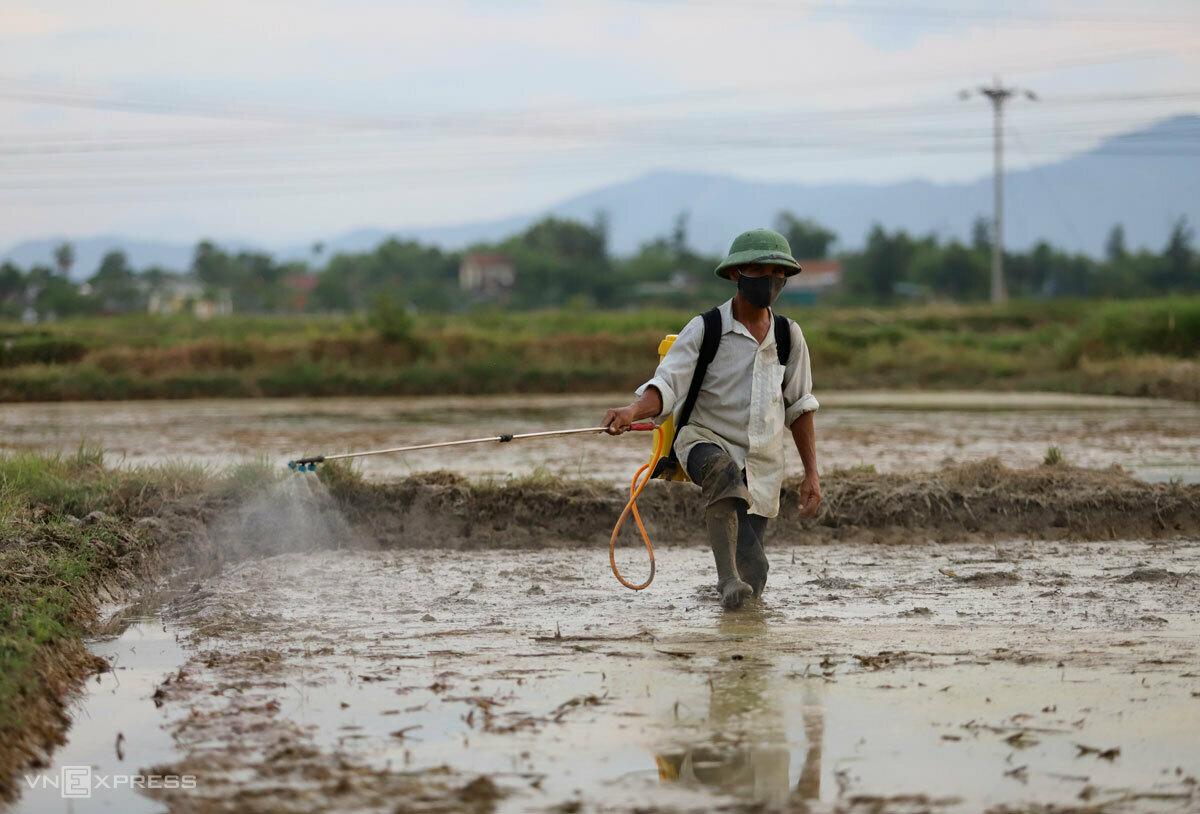 Nông dân Hà Tĩnh phun thuốc khi vừa gieo mạ. Ảnh: Đức Hùng.
