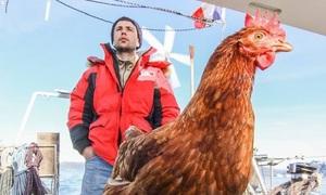 Chàng trai du lịch khắp thế giới cùng gà mái