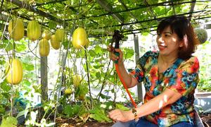 Vườn cây trĩu quả trên sân thượng