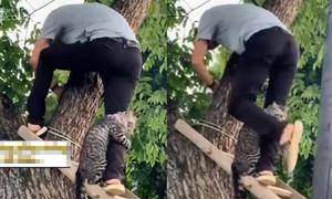 Mèo ôm chân người cứu hộ vì sợ độ cao