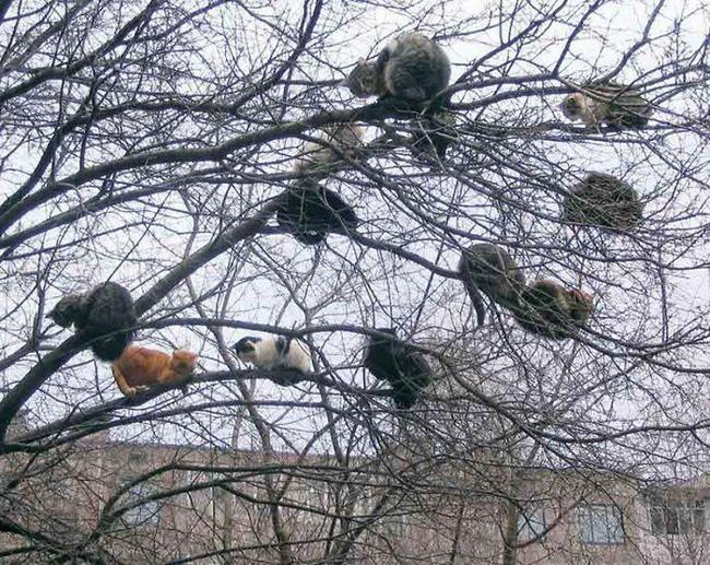 Cây này có nhiều con chim lạ quá...
