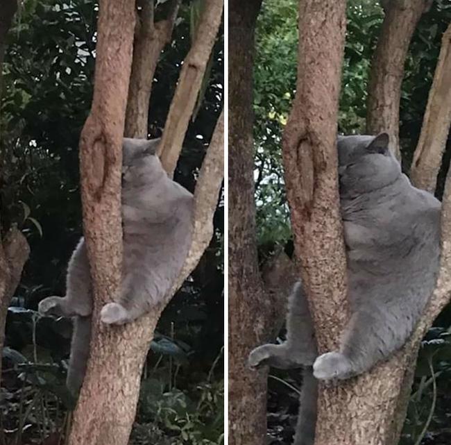 Gục mặt trên cây mà ngủ như này đây...