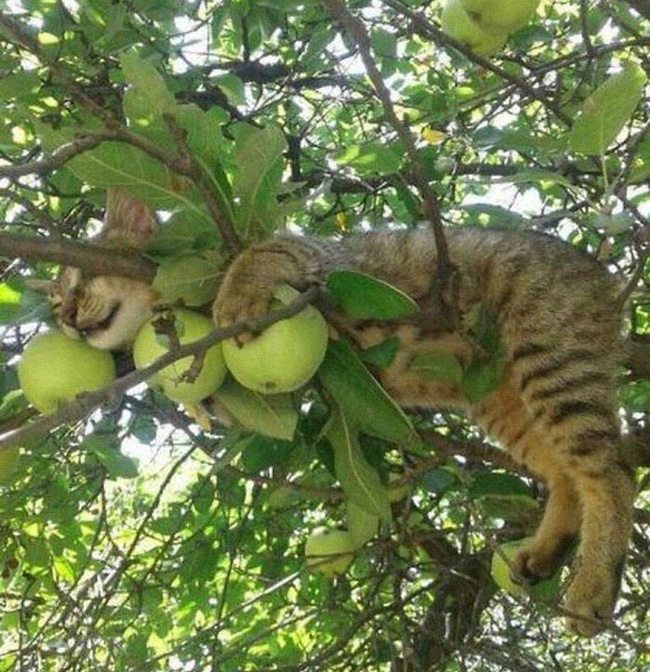 Mèo ngủ vắt vẻo trên cây - 6