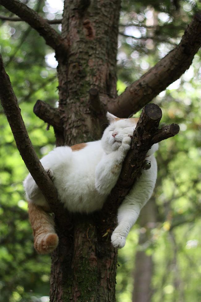 Mèo ngủ vắt vẻo trên cây - 8