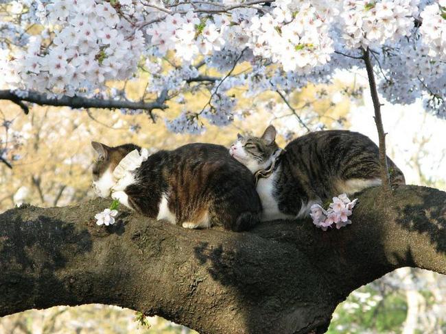 Mèo ngủ vắt vẻo trên cây - 10