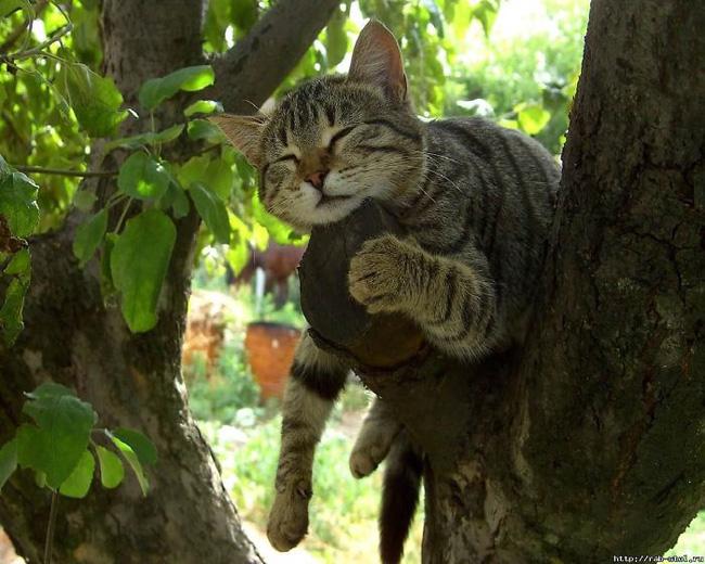 Mèo ngủ vắt vẻo trên cây - 12