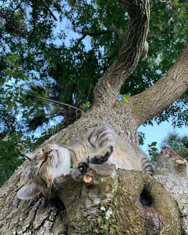 Mèo ngủ vắt vẻo trên cây - 14