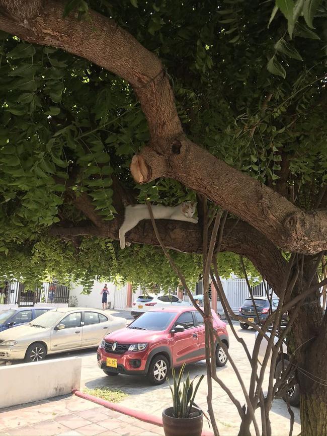 Mèo ngủ vắt vẻo trên cây - 16