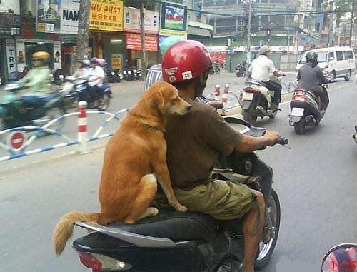 Loạt chó cưng khiến Messi cũng phải thua về độ ngầu