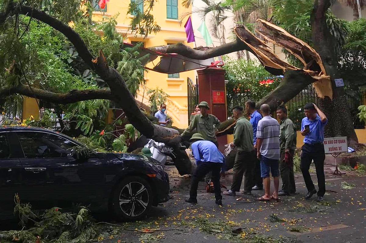 Cành cây bị gãy để lộ bên trong thân cây đã bị mục rỗng. Ảnh: CTV