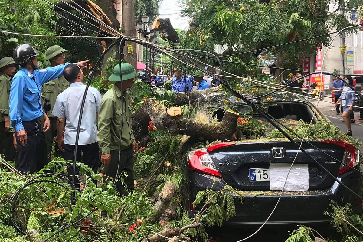 Một cành lớn của cây phượng trên 70 năm tuổi gãy, đè bẹp 1 xe ô tô và 4 xe máy của người dân trên đường Trần Bình Trọng, quận Ngô Quyền (Hải Phòng). Ảnh: CTV