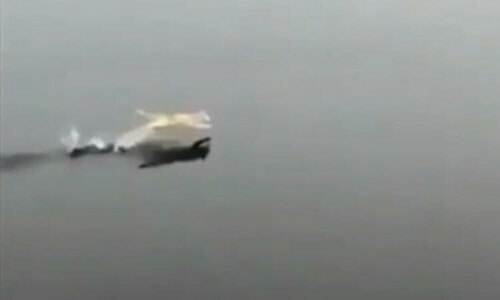 Chó dùng Lăng ba vi bộ chạy trên mặt nước - 1