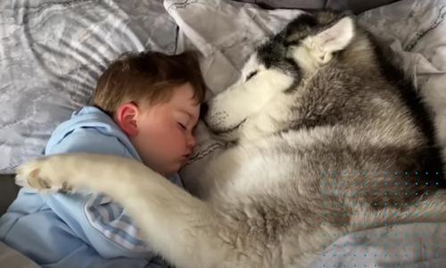 Chó cưng ôm bé trai ngủ ngon lành - 2