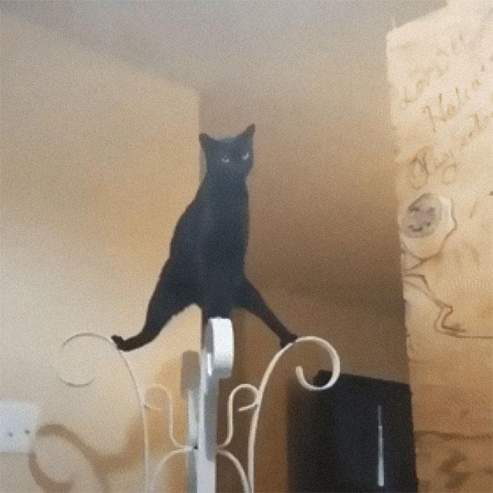 Kung-fu Mèo chuẩn bị tung chiêu.