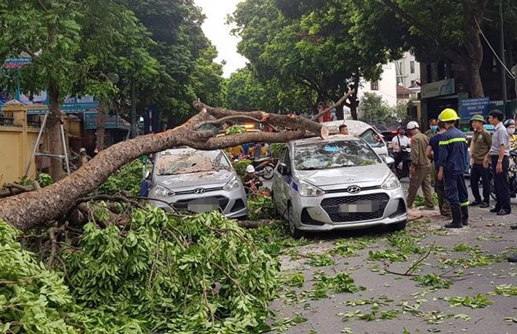 Ba ôtô bị cây xà cừ đổ đè lên trên đường Trần Hưng Đạo. Ảnh: Hữu Sơn.
