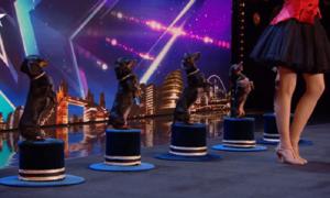 Năm cún cưng đại náo Britains Got Talent
