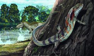 Phát hiện hóa thạch thằn lằn 130 triệu năm tuổi