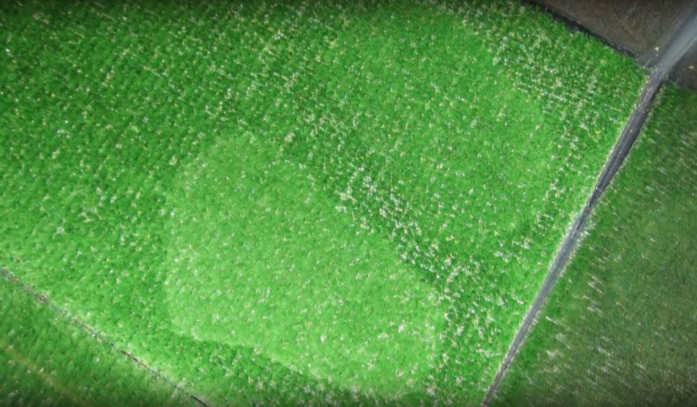 Thảm cỏ trong bể trăn cảnh có hai mảng sáng hơn bề mặt còn lại. Ảnh: Filmrise.