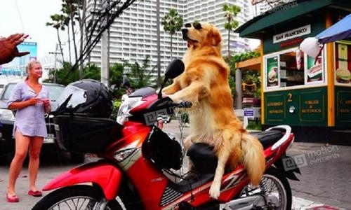Chó ra vẻ tội nghiệp để ăn xin - 2